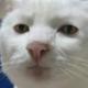 Аватар пользователя mechtatelokdo16