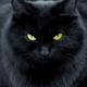 Аватар пользователя Catdiesel