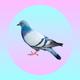 Аватар пользователя furiouspigeon