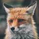 Аватар пользователя Nemos