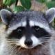 Аватар пользователя eno.tik