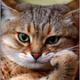 Аватар пользователя Doimnig