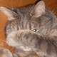 Аватар пользователя viona.R