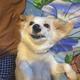Аватар пользователя GoldenASH