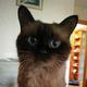 Аватар пользователя asfot