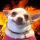 Аватар пользователя Starponykesa