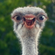 Аватар пользователя Eltropico