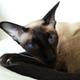 Аватар пользователя OKTL9373