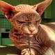 Аватар пользователя KychaKos