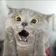 Аватар пользователя CeksCKotom