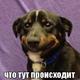 Аватар пользователя LoreenaM