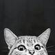 Аватар пользователя Diascordia