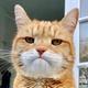 Аватар пользователя NewerSayNewer