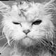 Аватар пользователя Neloh1