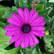 Аватар пользователя cvety.sph