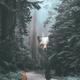Аватар пользователя Alisafox2019