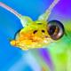 Аватар пользователя mikrofoto
