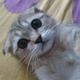 Аватар пользователя jabavsgaduka
