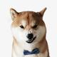 Аватар пользователя Gumshot