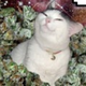 Аватар пользователя StupidRatel