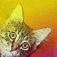 Аватар пользователя ProdelkiKota
