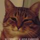 Аватар пользователя MaxBui
