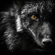 Аватар пользователя Blackfox127