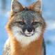 Аватар пользователя GrayFox123