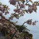 Аватар пользователя Tanaki.sun