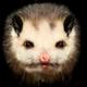Аватар пользователя Array