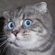 Аватар пользователя dragonfruit