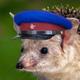 Аватар пользователя MaxNet