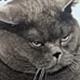 Аватар пользователя Arturinho