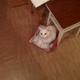 Аватар пользователя fen0ff