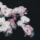 Аватар пользователя blossomtrap