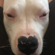 Аватар пользователя Dobbby