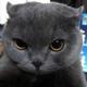 Аватар пользователя queyron