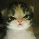 Аватар пользователя QuiseShampe