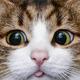 Аватар пользователя LolitaKissa