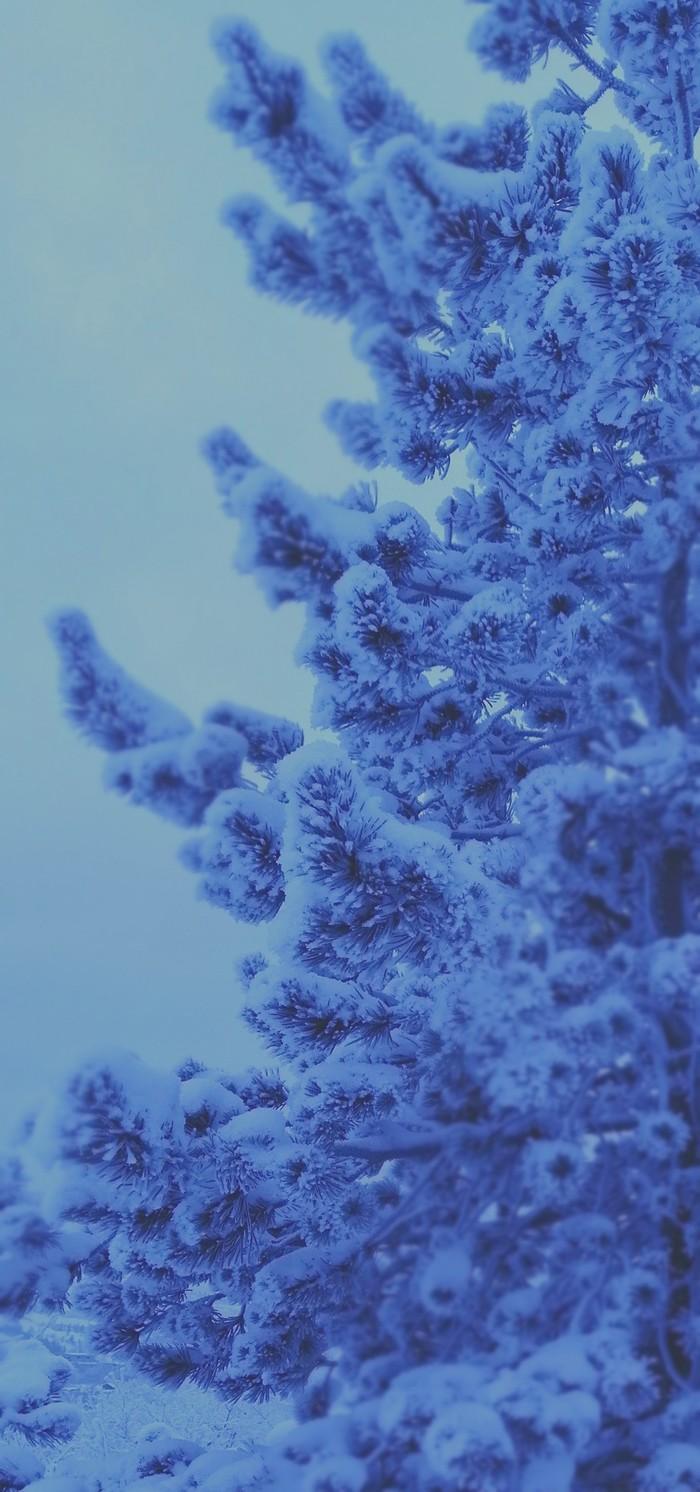 Немного природы) Начинающий фотограф, Зима, Сосна, Фотография, Длиннопост
