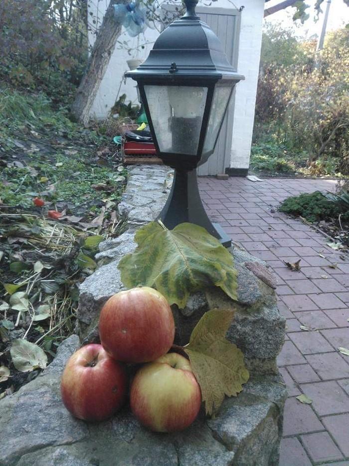 Осень Осень, Свой дом, Кот, Яблоки, Длиннопост