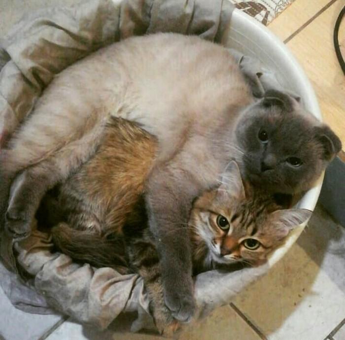 И в тазике уютно спать когда вдвоем