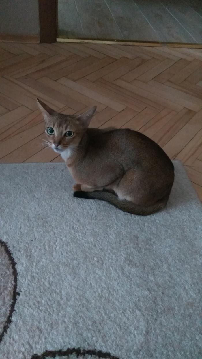 Найдена кошка/кот Найден кот, Потеряшка, Москва, Кот, Без рейтинга