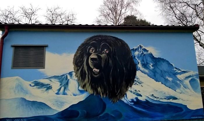 Граффити (так же как и стрит-арт) должны украшать стены, а не уродовать их #85 Уличная живопись, Стрит-Арт, Граффити, Фотография, Собака, Ньюфаундленд, Сестрорецк, Россия
