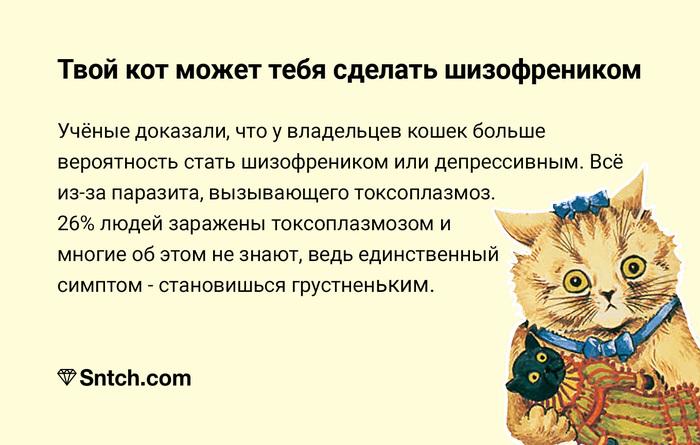 Кис-кис Кот, Токсоплазмоз