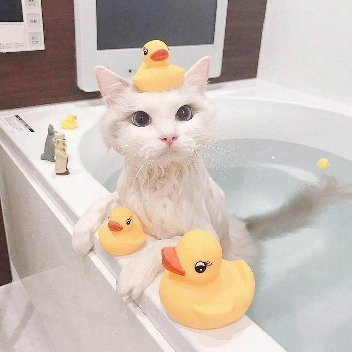 Маленький купальщик