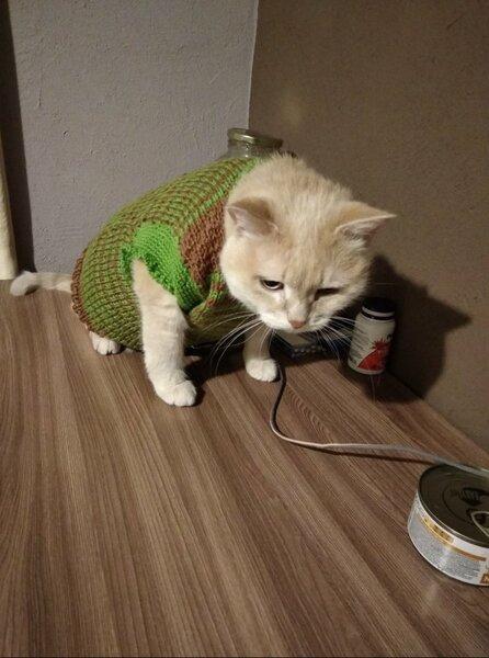 Котоистории: Холода. Кошка в окне. Кот, Котоистории, Красноярск, Холод, Длиннопост