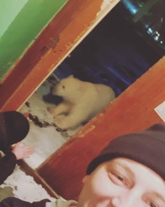 Умка уже не тот... Архипелаг Новая Земля, Архангельская область, Белый медведь, Нашествие, Фотография, Видео, Instagram, Длиннопост