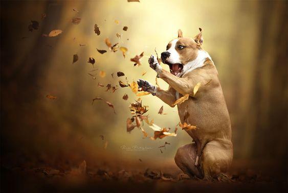 Жесткое нападение листьев на собачку