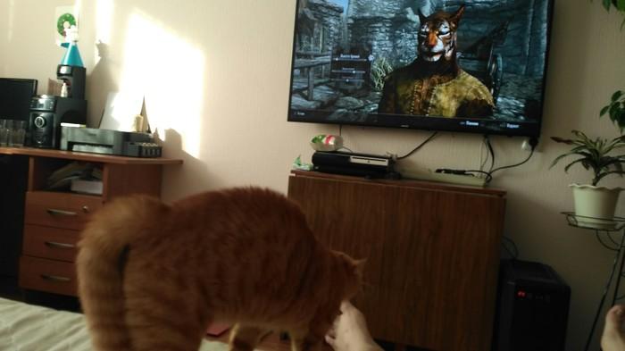 Реакция кота на каджита